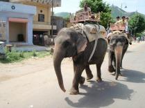 A local elephant