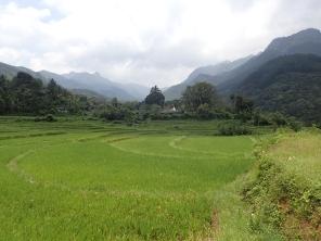 Some rice paddies