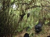 A blurry gorilla family
