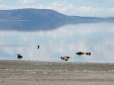 Fresh water Hyenas
