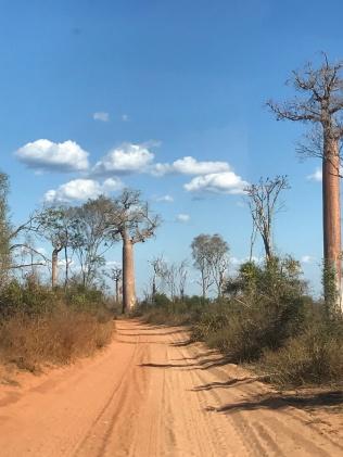 A few Baobabs
