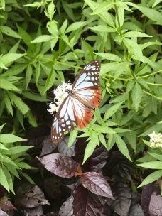 A butterfly in a garden