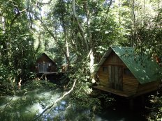 The mangrove huts