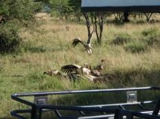Spot the hyena