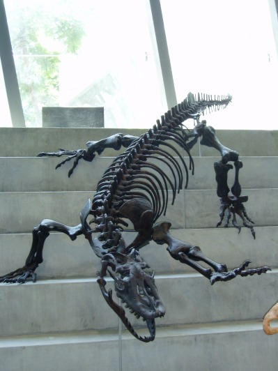 A very dead looking dinosaur