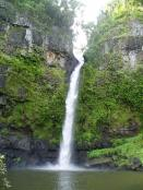 A lush waterfall