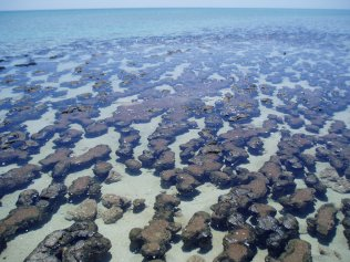 Incredible stromatolites